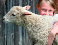 Stud Farm Animals